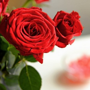 Florist About Us Page Examples